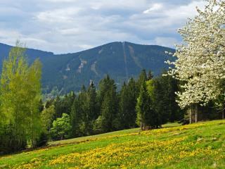 обои Зеленый лес на склоне горы фото