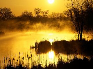 обои для рабочего стола: Сoлнце у горизонта и туман над прудом