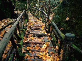 обои Старая деревянная кладка усыпанная листьями фото