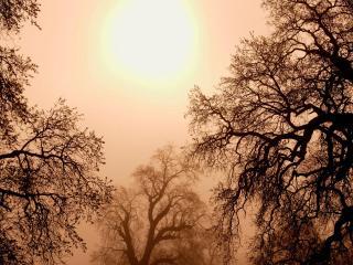 обои Хмурое небо и кроны деревьев фото