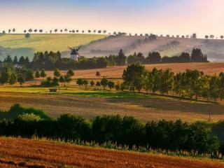 обои Лесополосы среди полей фото