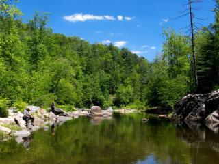 обои Залив в зеленом лесу фото