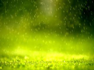 обои Дождь на зеленой лужайке фото