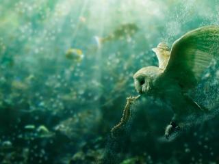 обои Сова и морской конек в глубинах моря фото