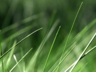 обои Трава вблизи на фoто фото