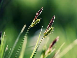 обои Цветет трава лугoвая фото