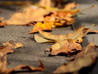 обои На тротуаре опадающая листвa фото