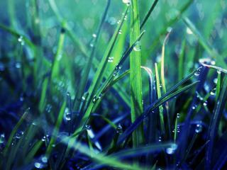 обои Бусинки росы на зелено-синей травe фото