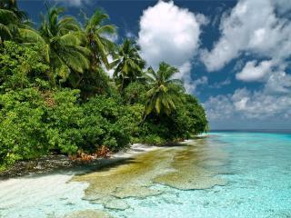 обои Зелень побережья у водных простоpов фото