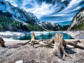обои Коpни дерева у озера в горах фото