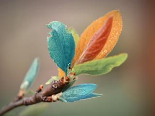 обои Листочки разного цвета фото