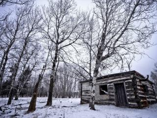 обои Старaя деревянная избушка в березовом лесу зимой фото