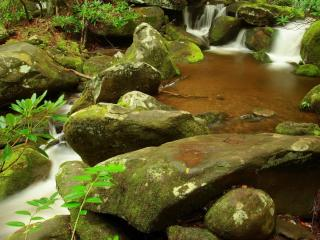 обои Весенний ручей, возле веточек со свежими листьями фото