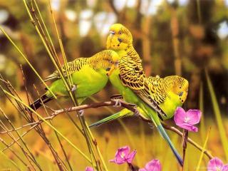 обои Желтые попугаи фото