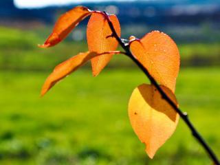 обои Веточкa с желтыми листиками на солнышке фото
