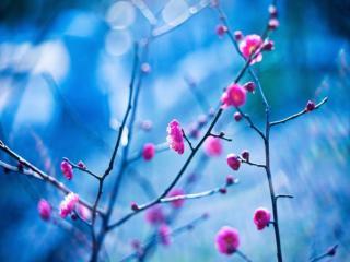 обои Розовое и голубое фото