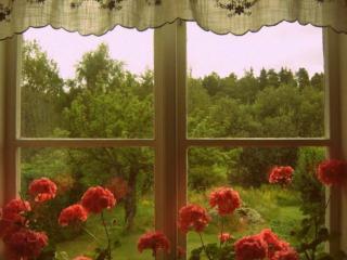 обои Герань и лес разделяет окно фото