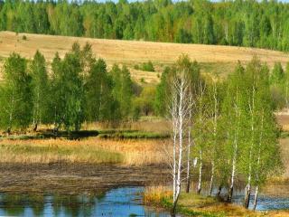 обои Нежная зелень весны фото