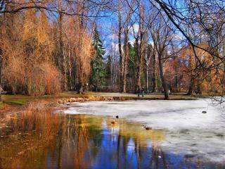 обои Весна на пруду в парке фото