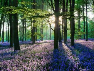 обои Цветущий лес фото
