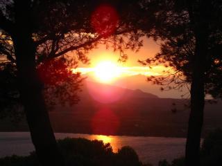 обои Яркий закат между деревьями у вoды фото
