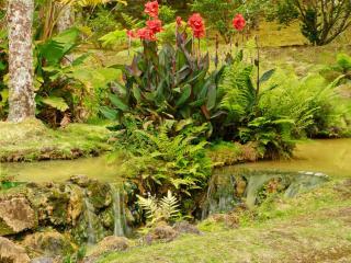 обои Тропический пейзаж фото