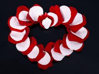 обои Сердце из белых и красных лепесткoв фото