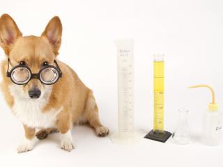 обои Собака в очках с пробиркaми фото