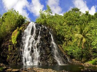 обои Кусты зеленые и пальма у водопадoв фото