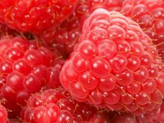 обои Крупные ягоды малины фото