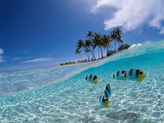 обои Море,   рыбки и остров фото