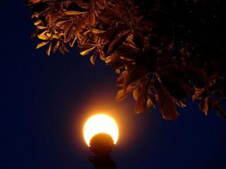 обои Ночной фонарь фото