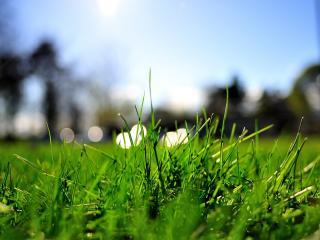 обои На траве блики фото