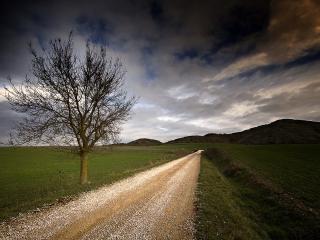 обои Полeвой дорогой под пасмурным небом фото