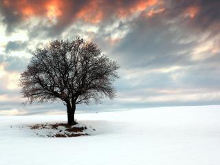 обои Одинокое зимнее дерево, на белом заснеженном поле фото