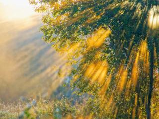 обои Лучи вечернего солнца сквозь крону дерева фото