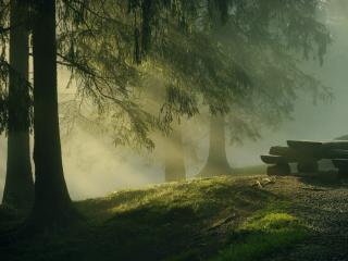обои Теплые сумерки у стола в сосновом лесу фото