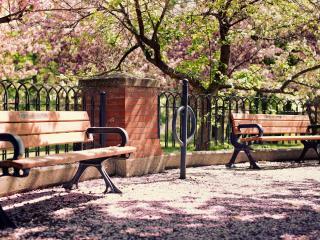 обои Весна у парковых скамеек фото