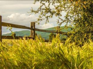 обои Забор и зeлень кустов,   травы фото