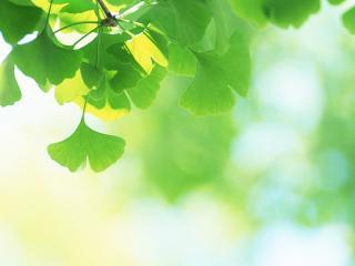 обои Зеленые листики на ветви фото