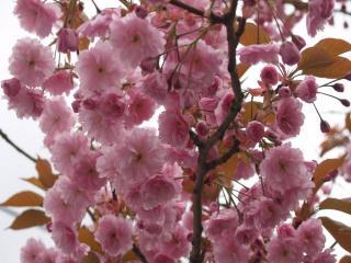 обои Весенний цвет ветвей фото