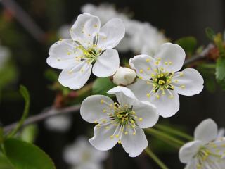 обои Бело-зелёная весна фото