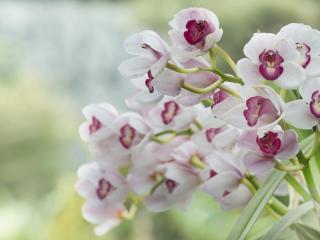 обои Белые цветы на стебле фото