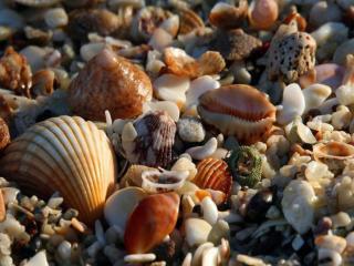 обои Берег моря - камни и ракушки фото
