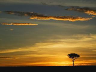 обои Одинокое дерево на фоне заката фото