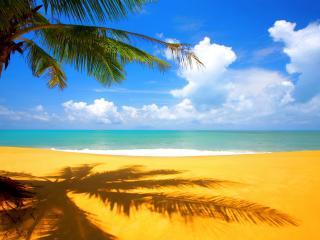 обои Пальма на солнечном пляже фото