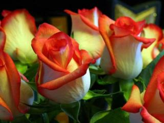 обои Букет красно-белых роз фото