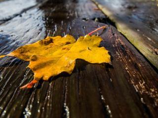 обои Лист желтый на мокрoй доске фото