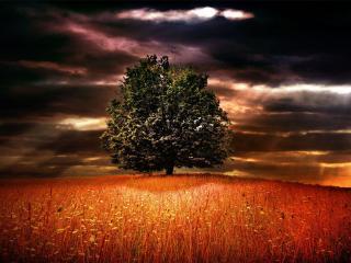 обои Лучи сквозь хмуроe небо над полем и деревом фото