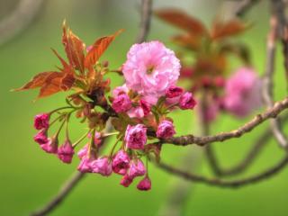 обои Распускаются листочки и цветы фото